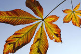 Leaves of an chestnut tree and blue sky — Stock Photo