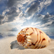 Conch shell — Stock Photo #7865173