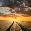 Sunset over fields - Stock Photo