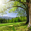 Spring landscape in the national park Sumava - Stock Photo