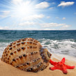 Conch shell — Stock Photo #7865810