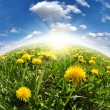 Dandelions in the meadow — Stock Photo #7865861