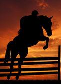 Jezdec na koni, skákání — Stock fotografie