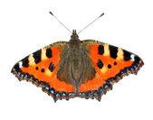 Kelebek Nymphalis urticae — Stok fotoğraf