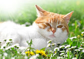 Cat in the grass — Stock Photo