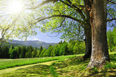 Spring landscape in the national park Sumava — Stock Photo