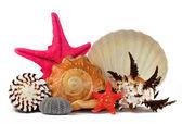 Conchas do mar tropical — Foto Stock
