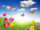 Flowers with butterfly — Stock Photo