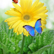 Gerberas with butterflies and ladybug - Stock Photo