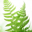 Fern in the moss — 图库照片