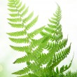 Fern in the moss - Stock Photo