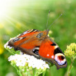 Butterfly — Stock Photo #7946972