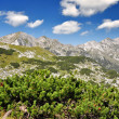 Triglav National Park — Stock Photo #7947121
