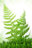 Fern in the moss — Stock Photo
