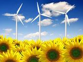 Turbina eolica con girasole — Foto Stock