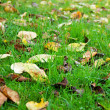 Stock Photo: Autumn grass
