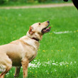 Training of the dog — Stock Photo