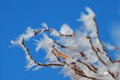 Imagen del detalle de rama congelada. — Foto de Stock