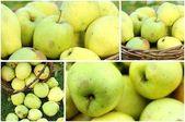 Apple collage — Stock Photo