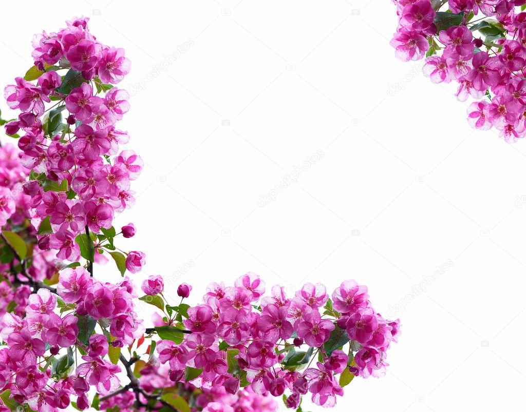 cadre d coratif de branches d 39 un pommier fleuri photographie glenkar 7909113. Black Bedroom Furniture Sets. Home Design Ideas