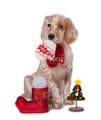 Dog sitting with christmas baubles, isolated white background — Stock Photo