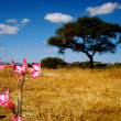 PAISAJE AFRICANO - Stock Photo