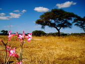 Paisaje africano — Foto Stock