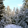 PINOS NEVADOS - Stock Photo