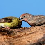 A Little Bird Told Me — Stock Photo #7919244