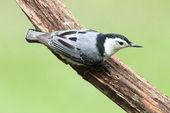 Uccello su un registro — Foto Stock