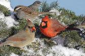 Mixed Flock Of Birds — Stock Photo