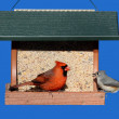 Birds on a Feeder — Stock Photo