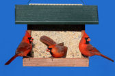 Cardinals on a Feeder — Stock Photo