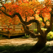 Tree in an Asian Garden — Stock Photo