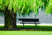 Park Bench with Weeping Willow — Stock Photo