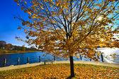 Fall tree near a lake — Stock Photo