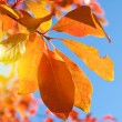 Red yellow fall leafs on blue sky background — Stock Photo #7920565