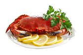 Crab on a platter — Foto Stock