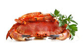 Crab with shrimp and parsley on a white background. — Stock Photo