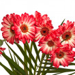 Bouquet of asters. — Stock Photo