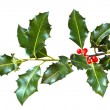 Holly leaves and berries isolated on a white background — Foto de Stock