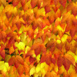 Background from autumn leaves. — Stockfoto #7946533