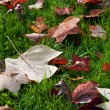 Background from autumn leaves. — Stockfoto #7946556