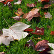 Background from autumn leaves. — Stock Photo #7946556