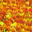 Stock Photo: Background from autumn leaves.