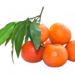 Tangerines with leaves isolated on white background - Stock Photo