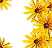 Rama żółte kwiaty — Zdjęcie stockowe