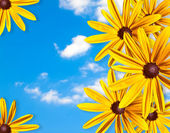 Frame of yellow flowers against the blue sky — Stock Photo