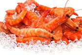Prawns on Ice — Stock Photo