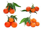 Tangerines with leaves isolated on white background — Stock Photo